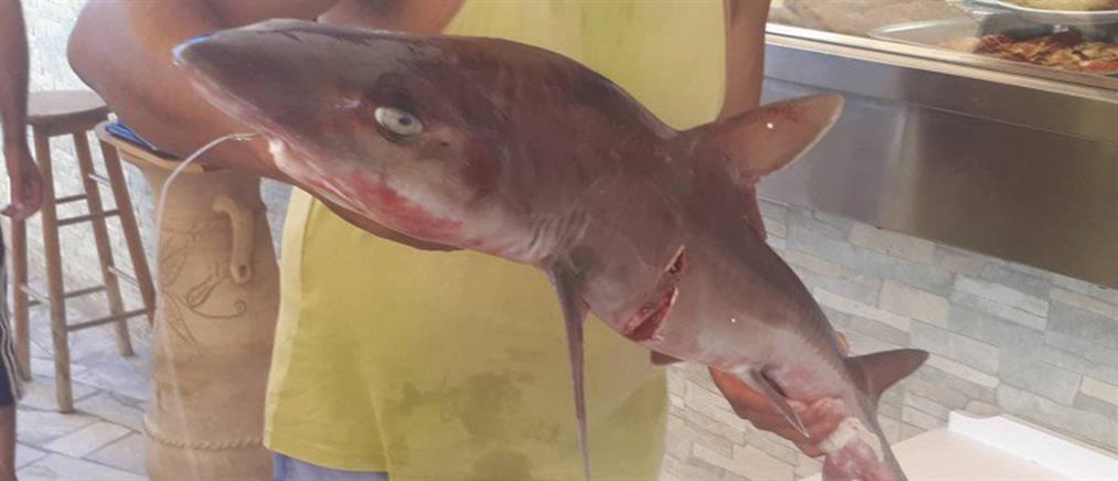Ψαράς έπιασε σπάνιο μικρό καρχαρία στην Γαύδο (εικόνες)