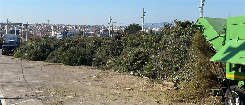 """""""Μήδεια"""" - Περιφέρεια Αττικής: Ανακύκλωση για τα δέντρα που ξερίζωσε η κακοκαιρία"""