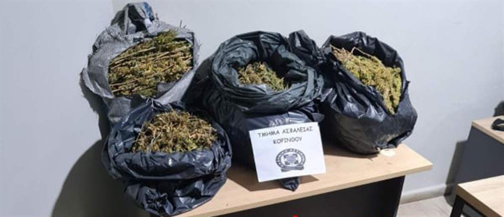 Κόρινθος: Πάνω από 22 κιλά κάνναβης σε αυτοσχέδιο αποξηραντήριο (εικόνες)