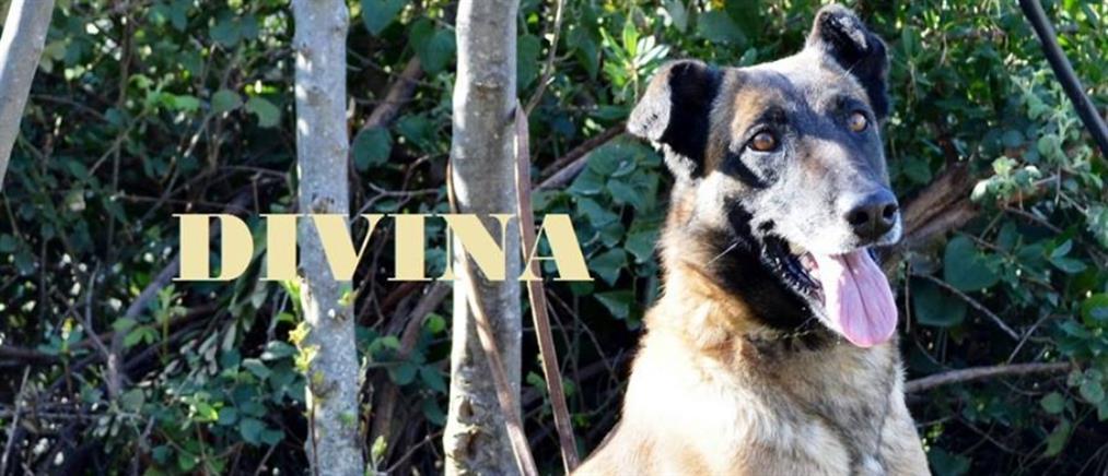 Αποστρατεύτηκε η Divina (εικόνες)