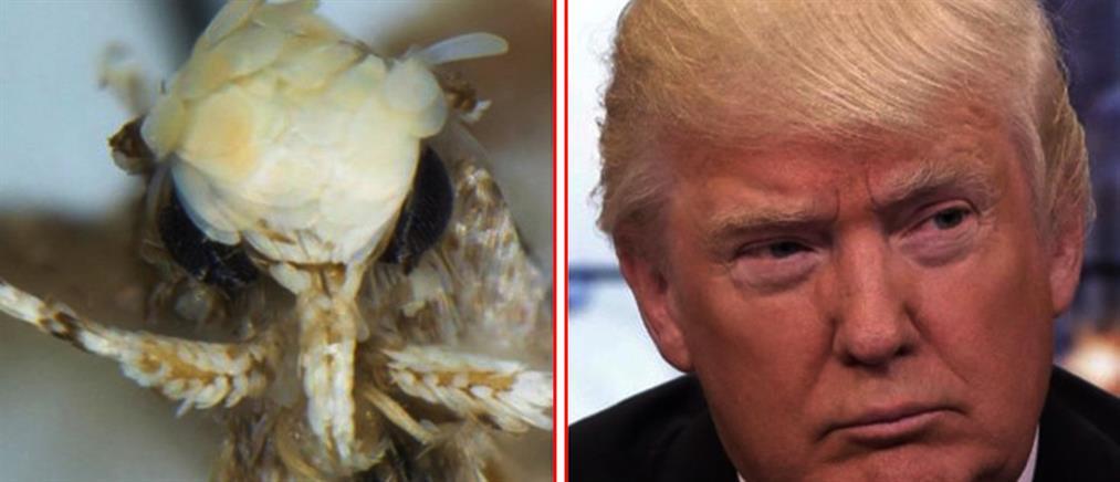 """""""Βάφτισαν"""" έντομο… Ντόναλντ Τραμπ"""
