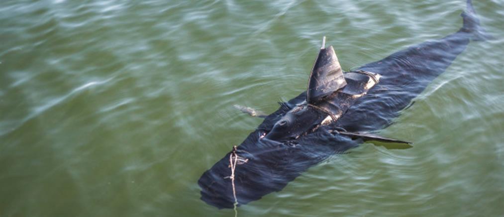 Αυτό είναι το «ψάρι φάντασμα»
