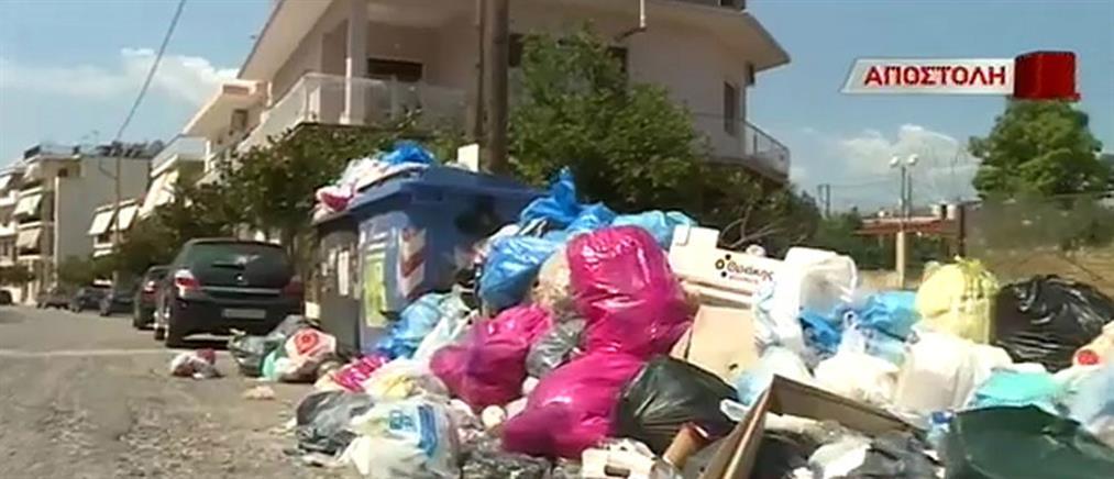 Δύσκολη η κατάσταση με τα σκουπίδια στο Αίγιο (βίντεο)