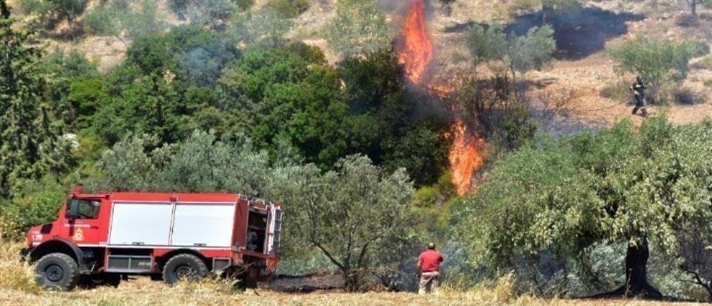 Φωτιά στην Αίγινα