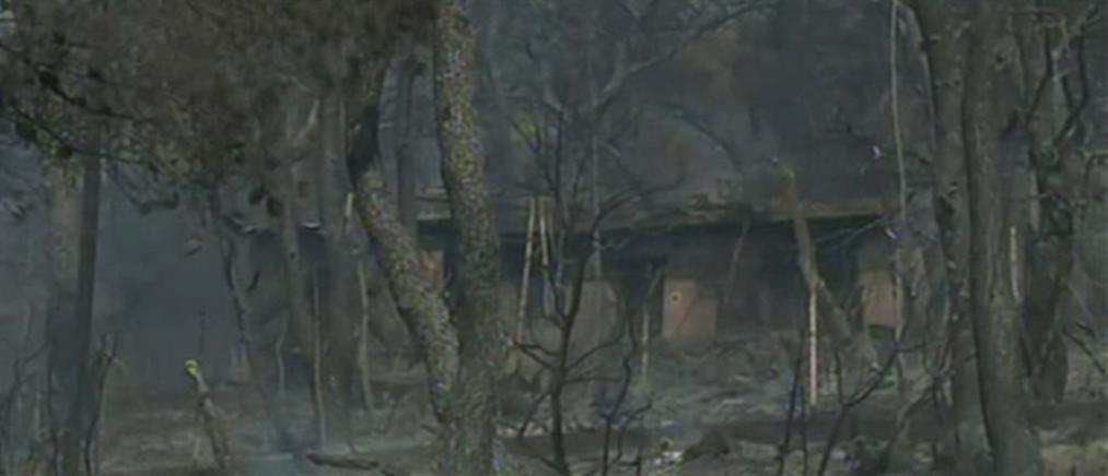 Φωτιές - Χρυσοχοΐδης: Παραμένουν ισχυρές δυνάμεις στη Δυτική Αττική