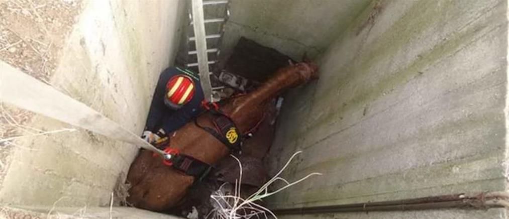 Εντυπωσιακή επιχείρηση διάσωσης αλόγου που  έπεσε σε φρεάτιο (εικόνες)