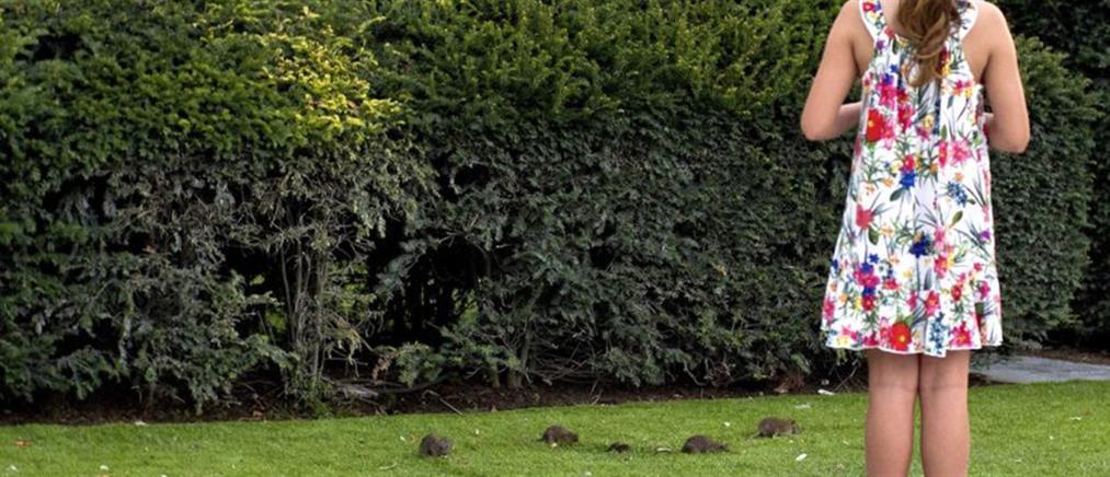 Εισβολή αρουραίων στα πάρκα γύρω από το Λούβρο