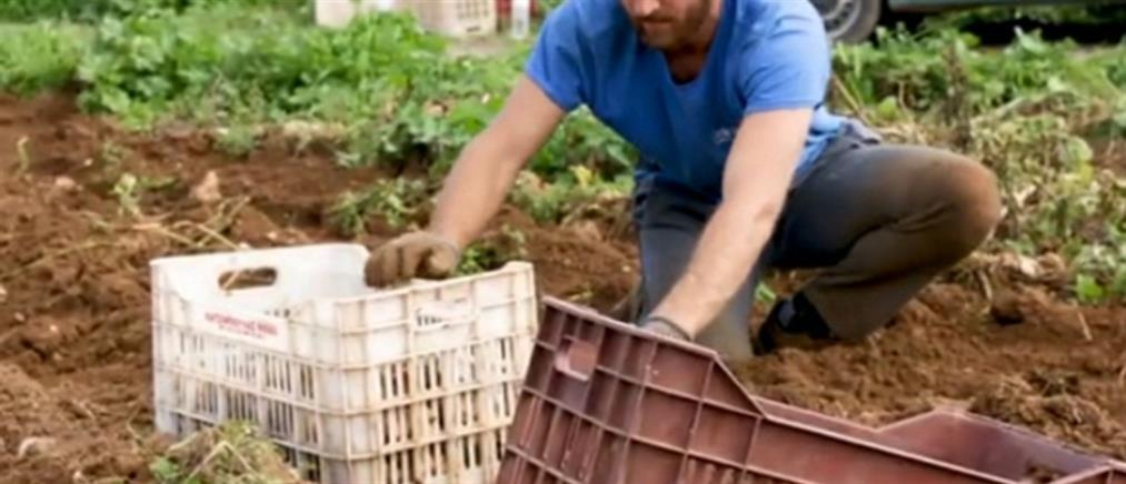 Κομισιόν: Έγκριση ελληνικού προγράμματος στήριξης παραγωγών