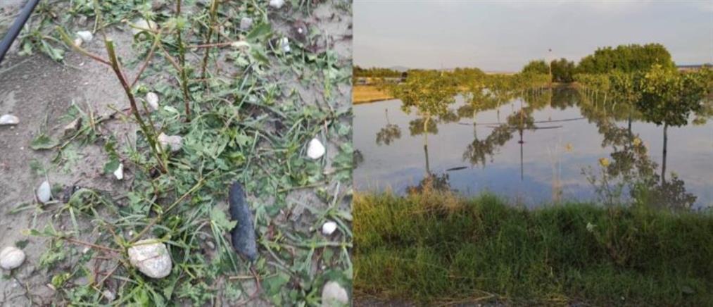 Μεγάλες καταστροφές στις καλλιέργειες σε περιοχές του Κιλελέρ (εικόνες)