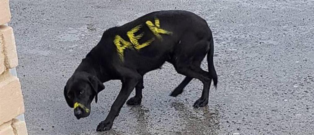 """Απίστευτο: """"Έγραψαν"""" σε σκύλο τη λέξη """"ΑΕΚ"""""""