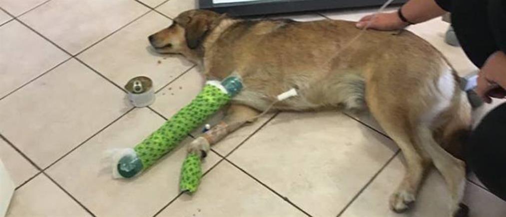 Φρίκη: Πυροβόλησε και τραυμάτισε αδέσποτο σκύλο (εικόνες)