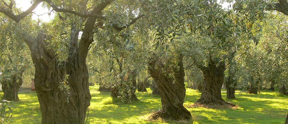 Πόσα είδη δέντρων υπάρχουν στη Γη – Πού βρίσκεται η μεγαλύτερη ποικιλία