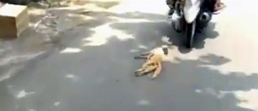 Βίντεο φρίκη: έδεσαν τη γάτα και την έσερναν από το μηχανάκι