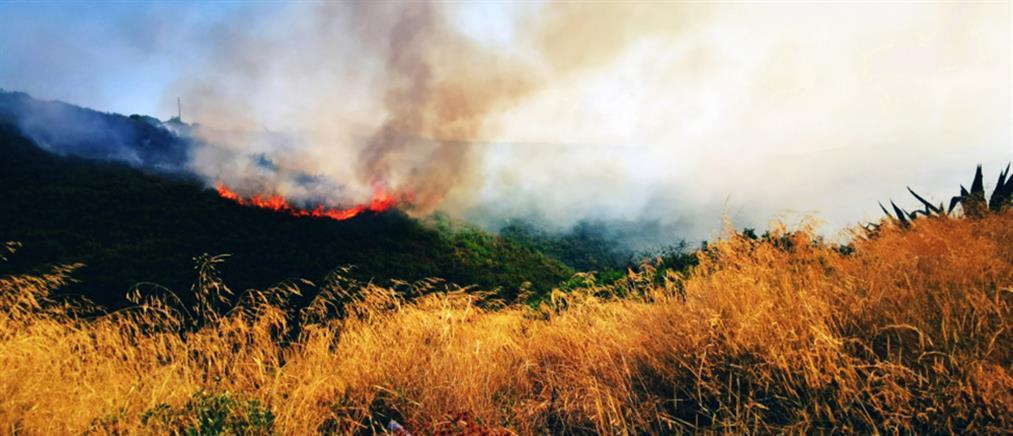 Συναγερμός για φωτιά στη Χαλκιδική