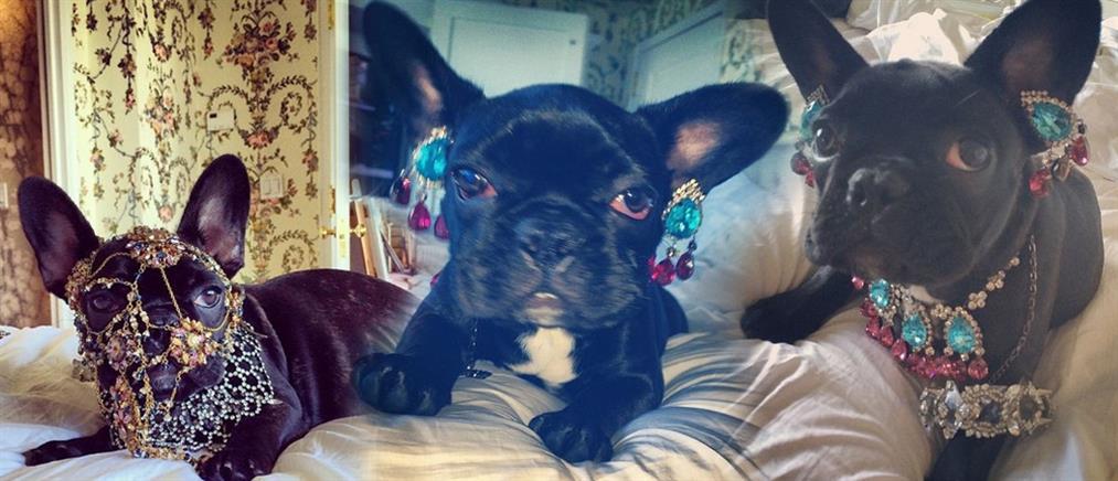 Η Lady Gaga «στόλισε» το σκυλάκι της και προκάλεσε αντιδράσεις