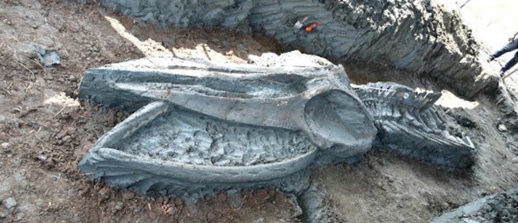 Βρέθηκε σκελετός φάλαινας 5.000 χρόνων (εικόνες)