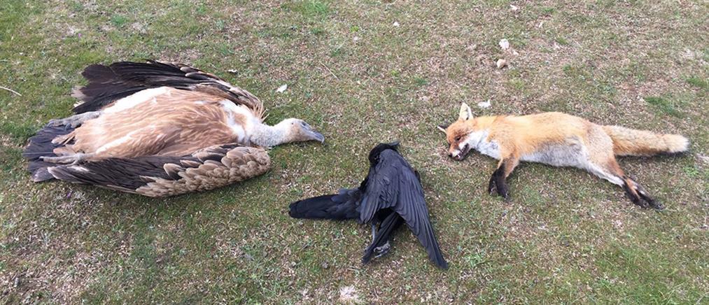 Δηλητηρίασαν δεκάδες σπάνια πουλιά στη Θράκη (εικόνες σοκ)