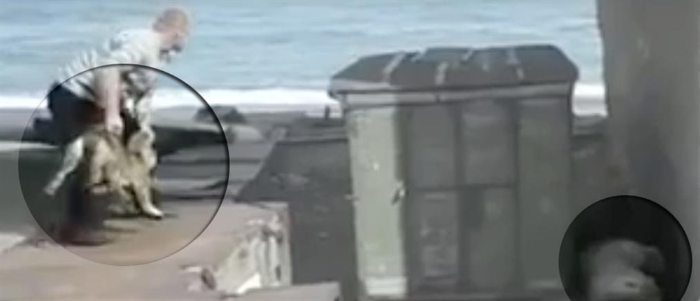 Βίντεο - σοκ: Πέταξε ζωντανό σκύλο σε πολική αρκούδα (Βίντεο)