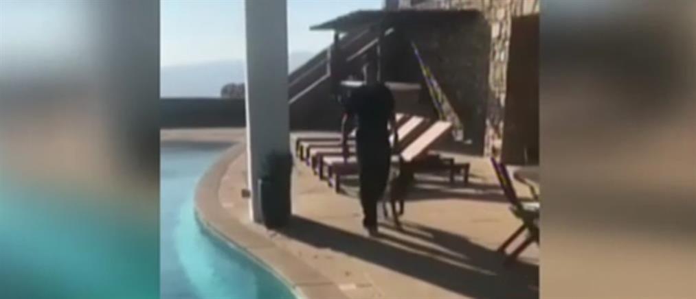 """""""Προσλαμβάνουν"""" εκπαιδευμένους σκύλους για να προστατεύσουν τις βίλες στην Μύκονο (βίντεο)"""