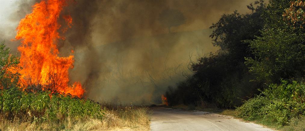 Φωτιά στο Μαρμάρι Ευβοίας