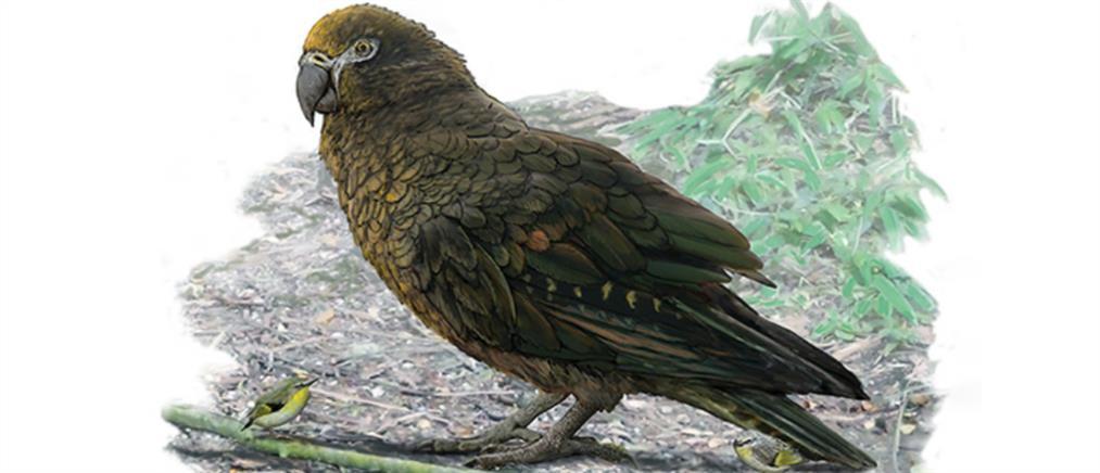 Ο μεγαλύτερος παπαγάλος που υπήρξε ποτέ (εικόνες)
