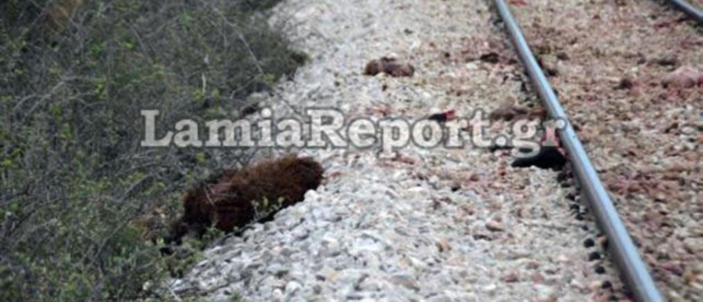 Τρένο συγκρούστηκε με αγριογούρουνα - Λαχτάρισαν οι επιβάτες
