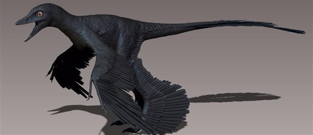 λατίνα σκατά μεγάλο πουλί