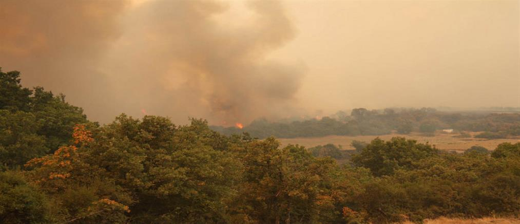 Μεγάλη πυρκαγιά στον Έβρο
