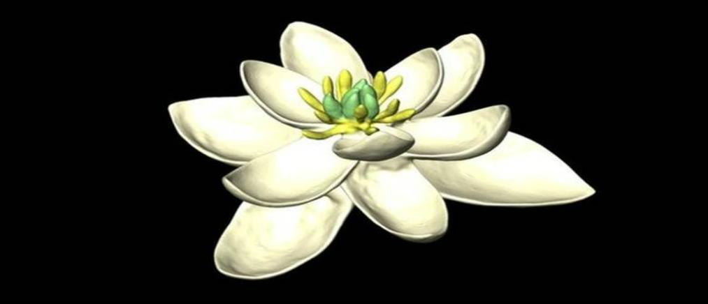 Έτσι ήταν το πρώτο λουλούδι που άνθισε στη Γη (φωτό)