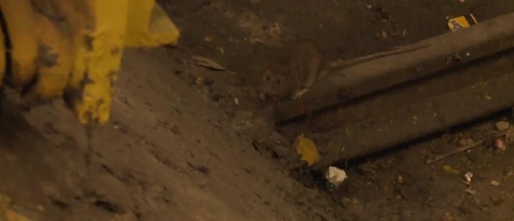 Ραγδαία αύξηση των ποντικιών στη Νέα Υόρκη (βίντεο)