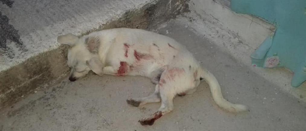 Σκότωσαν σκύλο γιατί πήγε να ζευγαρώσει με θηλυκιά
