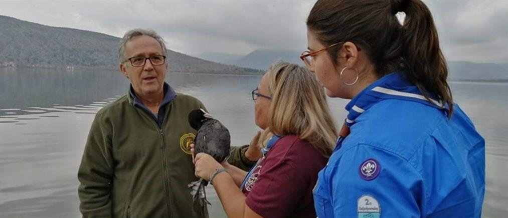Διάσωση φαλαρίδας στη λίμνη της Καστοριάς (βίντεο)