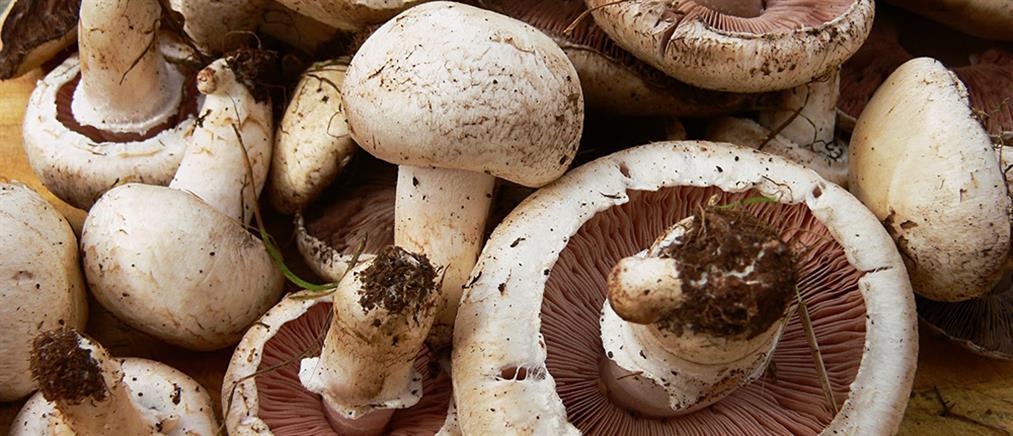 Δηλητηριώδη μανιτάρια «σκότωσαν» Αγιορείτη μοναχό