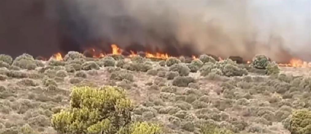 Φωτιά στην Κερατέα: εντολή για εκκένωση του οικισμού Μαρκάτι