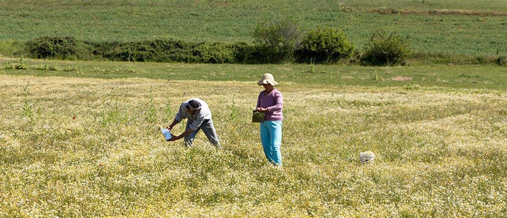 Συνταξιούχοι με αγροτικό εισόδημα: ρύθμιση για τις εισφορές