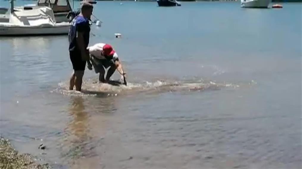 Κροατία: Διάσωση δελφινιού στην Αδριατική Θάλασσα
