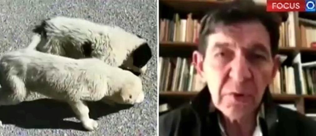 Παγκόσμια Ημέρα Αδέσποτων Ζώων: Τα μηνύματα γνωστών ηθοποιών (βίντεο)
