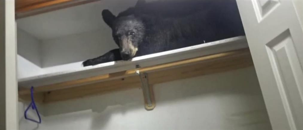 """Αρκουδάκι """"κόλλησε"""" σε ντουλάπα σπιτιού (βίντεο)"""