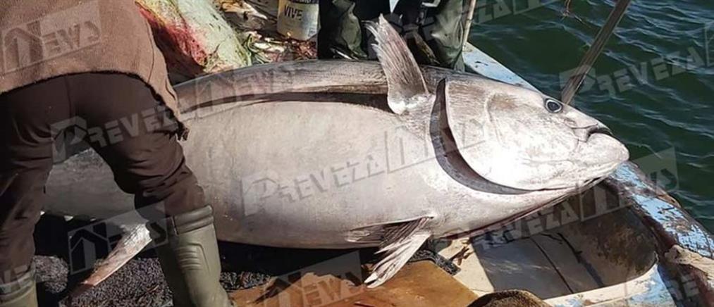 Ψάρι 130 κιλών πιάστηκε στο Ιόνιο (εικόνες)
