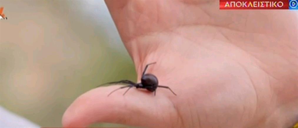 """""""Μαύρη Χήρα"""": Θύμα της επικίνδυνης αράχνης περιγράφει στον ΑΝΤ1 τα συμπτώματα (βίντεο)"""