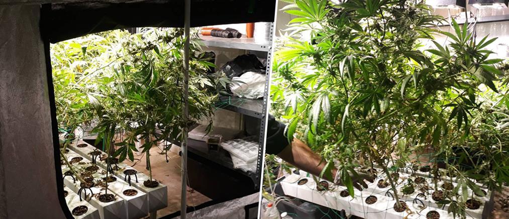 Καλλιεργούσε κάνναβη στο διαμέρισμά του (εικόνες)