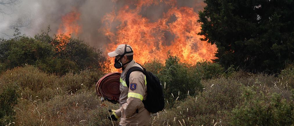 Θεσσαλονίκη: Φωτιά στο Σέιχ Σου (εικόνες)