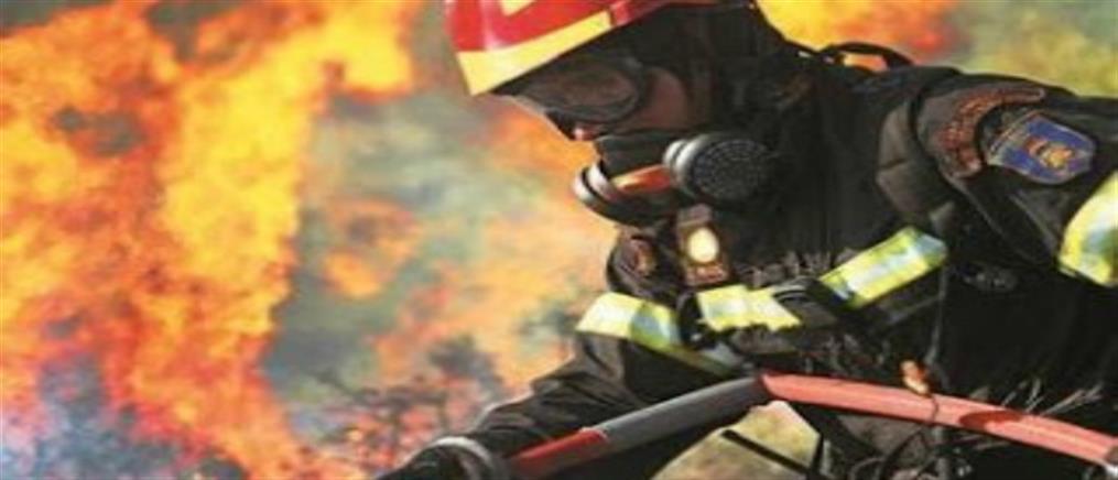 Απίστευτο: Σκύλος δάγκωσε πυροσβέστη την ώρα που έσβηνε φωτιά!