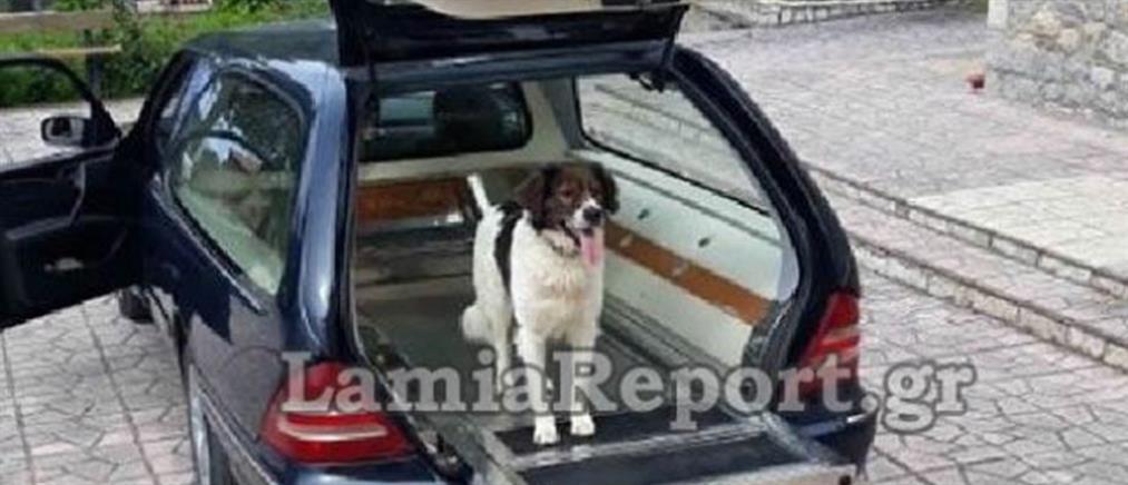 Συγκλόνισε σκύλος στην κηδεία του αφεντικού του (εικόνες)