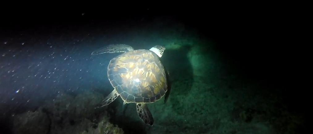 Θαλάσσιες χελώνες: ρεκόρ από φωλιές στην Ελλάδα το 2020