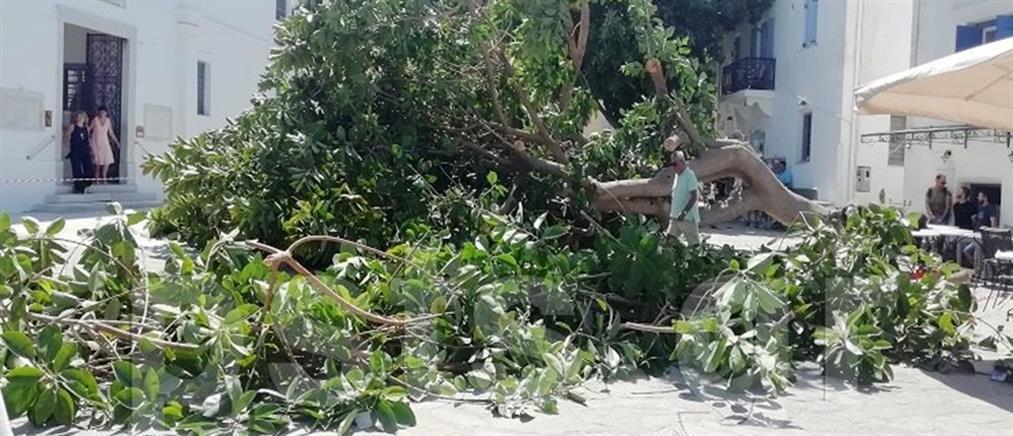 Τον καταπλάκωσε δέντρο στην είσοδο της Εκατονταπυλιανής (εικόνες)