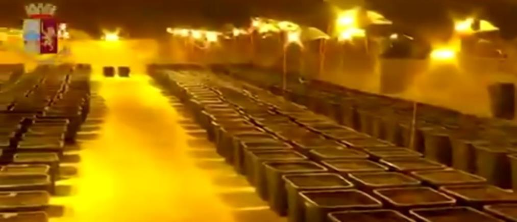 Φυτεία κάνναβης βρέθηκε πίσω από… ντουζιέρα (βίντεο)