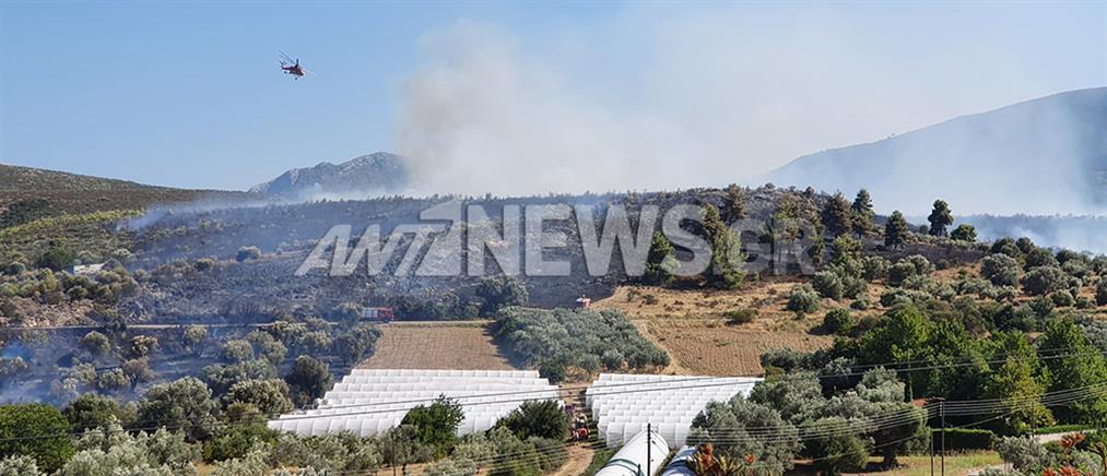 Μεγάλη φωτιά στο Μαραθώνα (βίντεο)