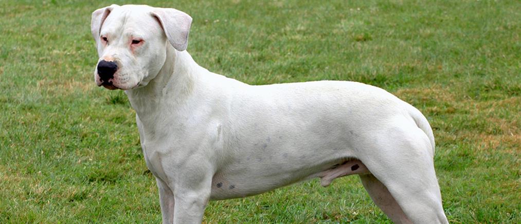 Από τις δαγκωματιές του σκύλου της πέθανε η γυναίκα στον Βόλο