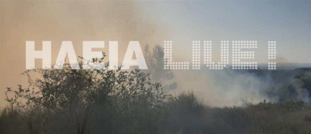 Φωτιά στην Ηλεία (εικόνες)